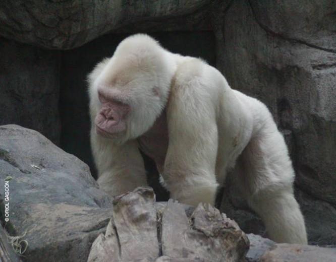 El albinismo es una condición genética caracterizada por el déficit de pigmentación en la piel, cabello y ojos. (Foto: Oril Gascon)